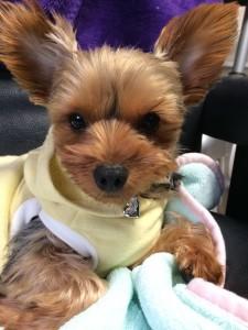 犬に鑑札札、迷子札を付けて愛犬を守ろう!