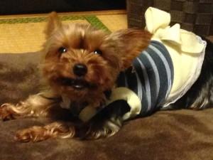 小型犬に多い、関節の病気/脱臼について