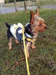 犬の春の健康管理、病気予防について