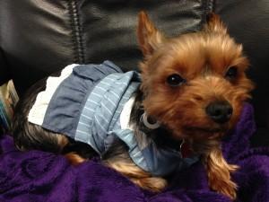 犬の春の健康管理と季節のケアについて