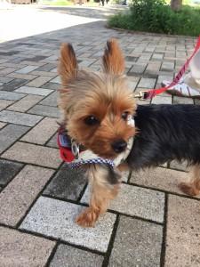犬のお散歩に携帯したい、飼い主としてのマナー