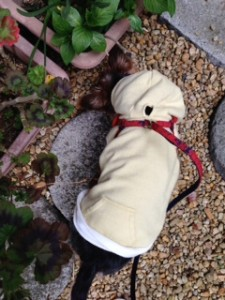 雨の日のお散歩を楽しむ犬のヨーキーさん