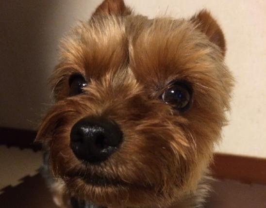 犬の鼻のシワの秘密