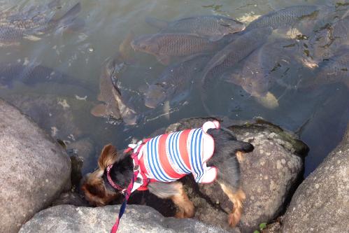 鯉に大接近するクレアさん