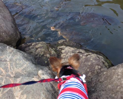 鯉を見つめるクレアさん