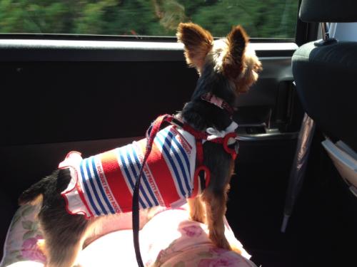 車窓を楽しむクレアさん
