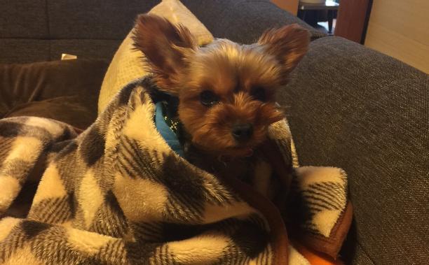 毛布から出れない犬のクレアさん