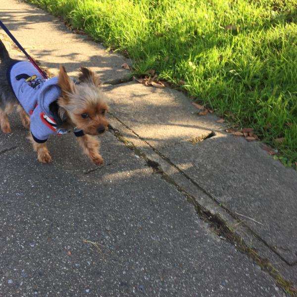 散歩が楽しいクレアさん