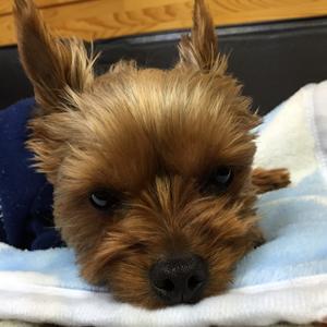 犬のいびきは病気のサイン?!
